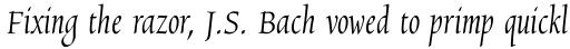 Chicory Std Regular sample