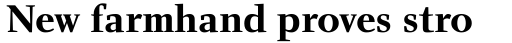 Charlotte Serif Bold sample